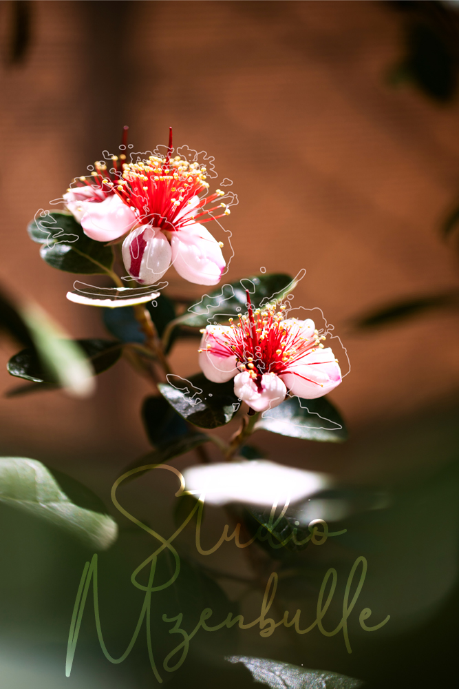 Fleurs Graphiques